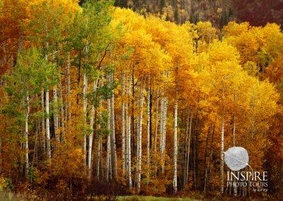 Autumn Spendor
