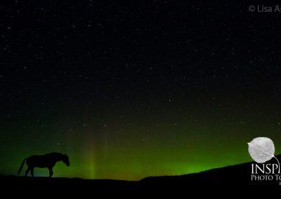Wild Horse and Auroras
